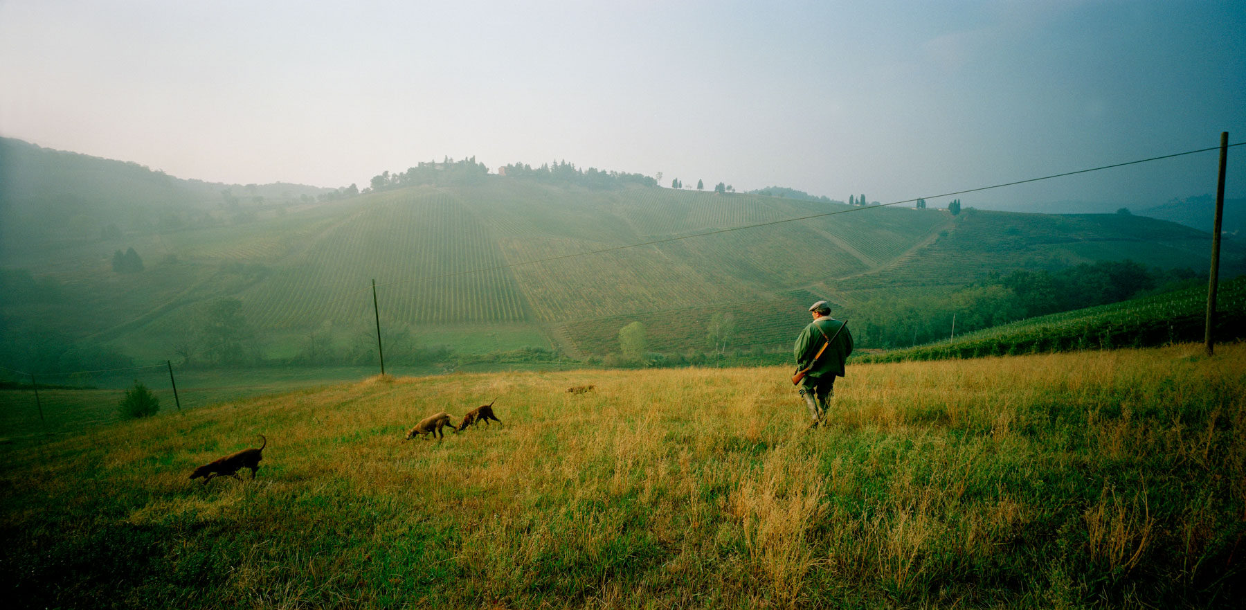 hunting-italy-dogs